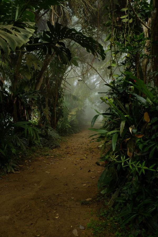 Colombiaanse junglestudio, Nils Verkaeren